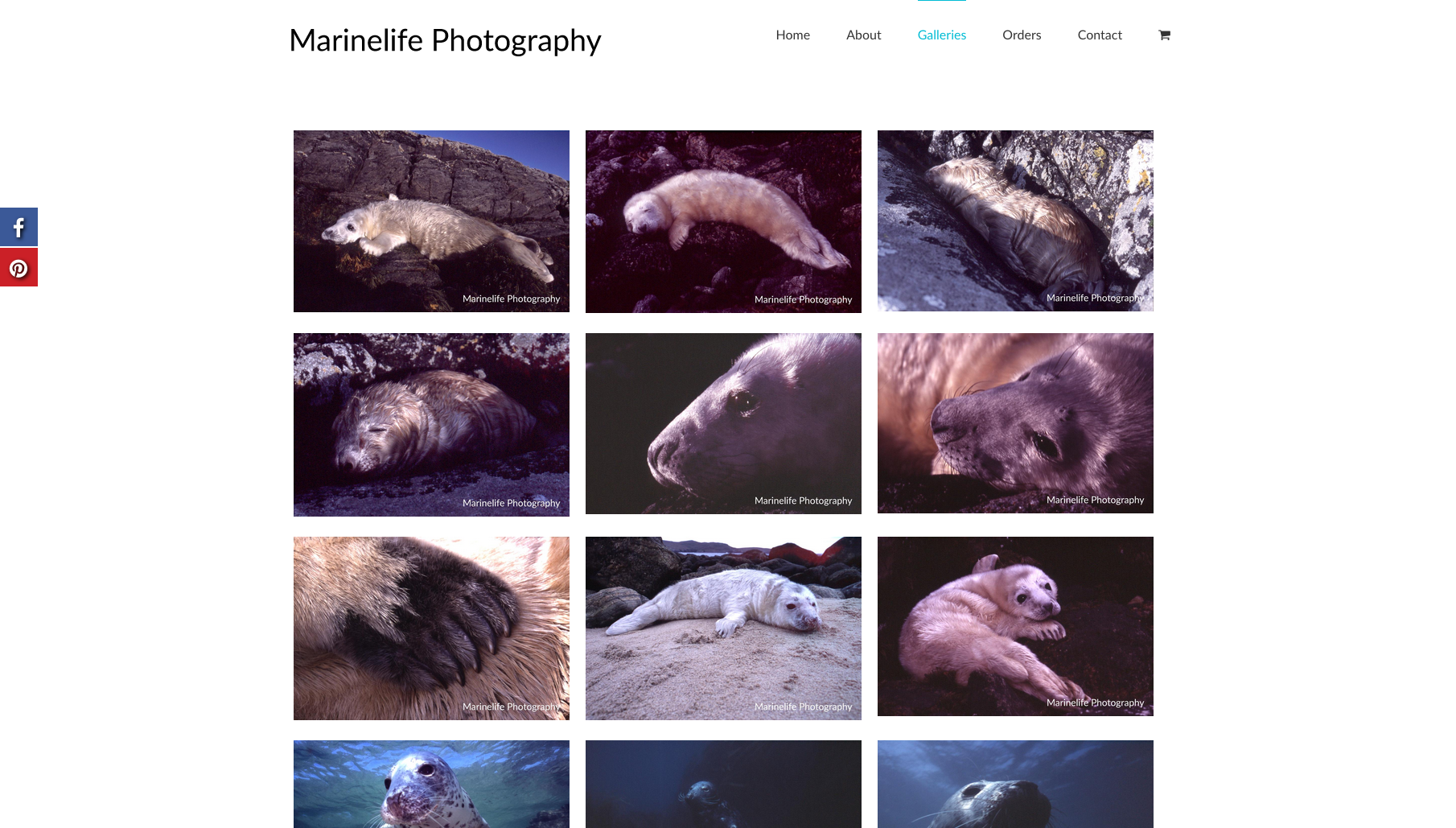 Marinelife Photography gallery page - design by collective.digital