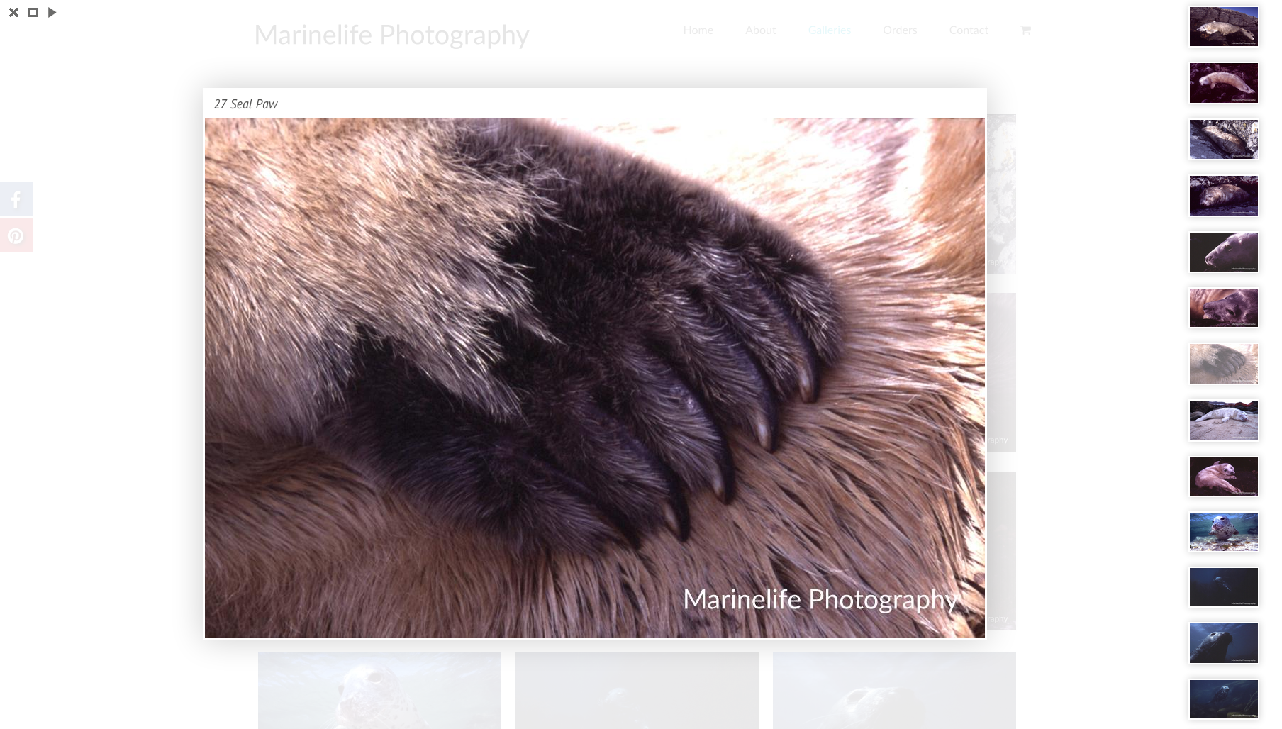 Marinelife Photography seal paw gallery image - web design by collective.digital